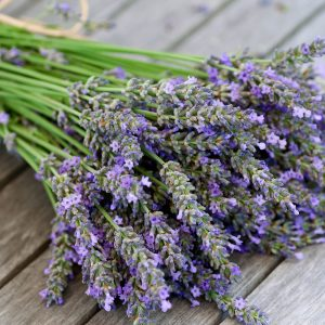 sweet lavender fragrance oil amaris chemical solutions